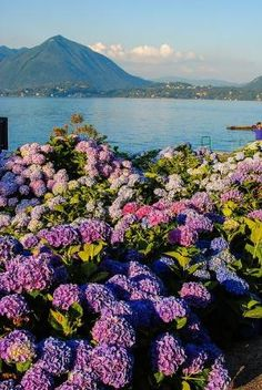 Lago Maggiore, Italy by sonia
