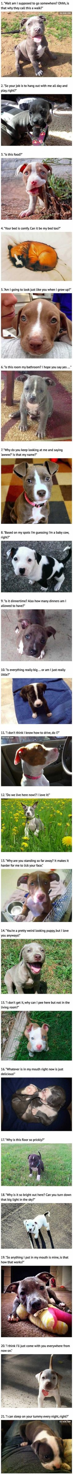 These Cute Pit Bull Puppies Haven't Quite Figured Things Out Yet