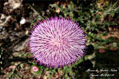 #Flor #Cardo vista desde arriba