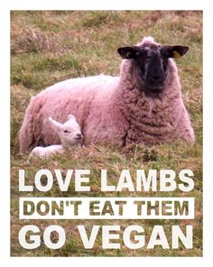 #love lambs, don't eat them go #vegan