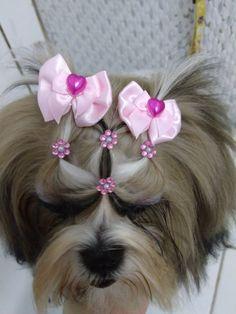 Chien Shih Tzu, Perro Shih Tzu, Shih Tzu Dog, Dog Hair Bows, Pet Shop, Cute Dogs, Cute Hairstyles, Gorgeous Hairstyles, Dog Hair Removal