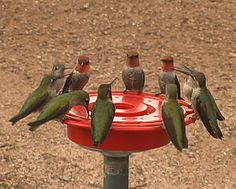Hummers of the Round Table? Photo by Charles W. Melton