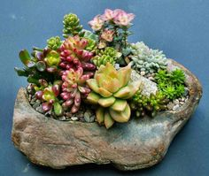 I really like this amazing photo Artificial Grass Rug, Succulents In Containers, Container Gardening, Cool Photos, Diy And Crafts, Amazing, Plants, Gardens, Design