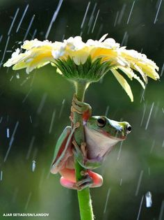 Awww I love frogs and he looks quite happy under his flower