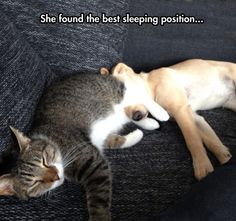 Best sleeping position... - The Meta Picture