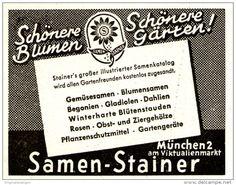 Original-Werbung/ Anzeige 1951 - SAMEN - STAINER - MÜNCHEN - ca. 45 x 40 mm