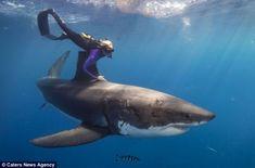 Denizlerin en tehlikeli avcısı Büyük Beyaz cinsi köpekbalıkları hakkındaki önyargıyı kırmak için tehlikeli bir yolculuğa çıkıyor...