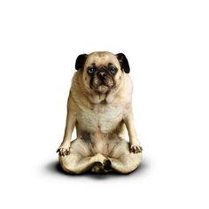 Bahaha! Yoga dog.
