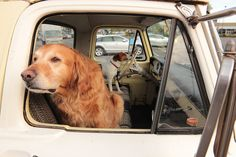 look at that dog drivin' that truck