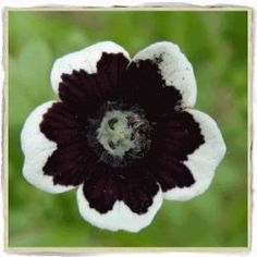 One of the most intriguing new trends in gardening over the last few years is to create a garden using dark hued or black flowers. Some of those...