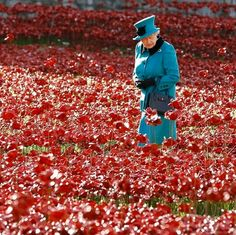 The queen among the poppies