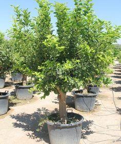 unterpflanzung begleitpflanzen f r einen rhododendron garten pinterest gartenpflanzen. Black Bedroom Furniture Sets. Home Design Ideas