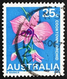 Cooktown Orchid, Queensland, State Flower, stamp printed in the Australia, circa 1968