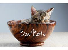 Boa Soninho!!! www.petmeupet.com.br