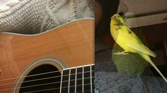 今日の日はさようなら 森山良子 ギター弾き語りカバー