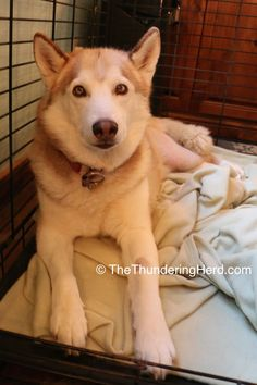 Time to share our weekly TPLO Recovery - now with two dogs at once! #dog…