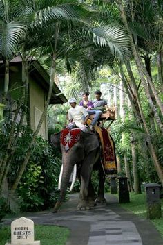 Elephant Safari - Bali This is going on my Bucket List!!!