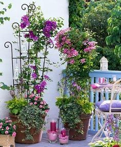 Balcony garden with mixed containers of Clematis Hybriden 'Piilu' and 'Mrs M. Thompson' underplanted with Hosta, Hedera and Impati
