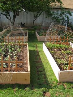 beautiful raised planting beds with wire covers