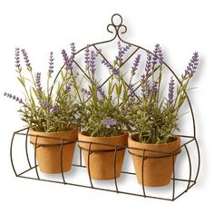 """Find product information, ratings and reviews for 17"""" Potted Lavender Plants in Rack - National Tree Company online on Target.com."""