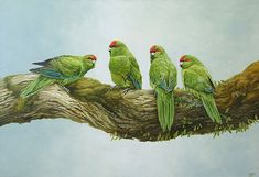 Art by the Sea art gallery specializes in fine NZ arts and crafts, with a huge range of original, fine New Zealand and Maori arts and crafts. Bird Artists, Maori Designs, New Zealand Art, Nz Art, Bird Artwork, Parrot Bird, Parakeets, Parrots, Wildlife Art