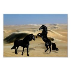 Wild black beauty horses and sand dunes poster