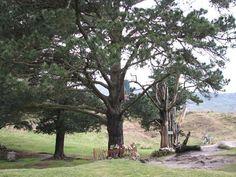 Los pinos de San Sebastian de Garabandal. Lugar donde se apareció la Virgen a las niñas