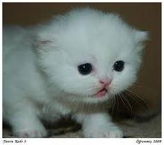 yavru kediler ile ilgili görsel sonucu