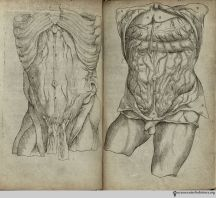 Brains, Brawn, & Beauty: Andreas Vesalius and the Art of Anatomy Andreas Vesalius, Anatomy, History, Illustration, Medicine, Beauty, Historia, Illustrations, Medical