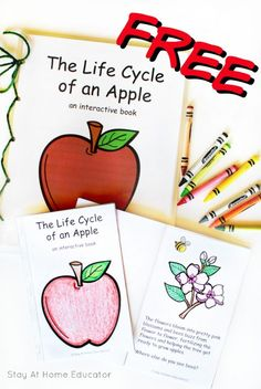 Cycle Printable + Other Apple Activities Apple Life Cycle Printable booklet and class book for apple theme in preschool, kindergarten and beyondApple Life Cycle Printable booklet and class book for apple theme in preschool, kindergarten and beyond Kindergarten Science, Preschool Lessons, Preschool Activities, Preschool Prep, Kindergarten Themes, Preschool Bible, Autumn Activities, Preschool Learning, Science Lessons