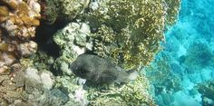 Coral Reef Pictures, Turtle, Fish, Pets, Animals, Turtles, Animales, Animaux, Tortoise