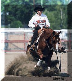 2005 AQHA reining stallion at stud