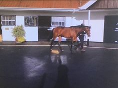 Lancaster Bomber, Cow, Horses, Animals, Animaux, Horse, Animal, Animales, Animais