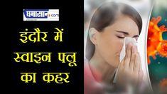 इंदौर में SWINE FLU का कहर | Swine Flu in indore Swine Flu, Time News, Indore