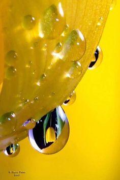 Rain drops in yellow macro