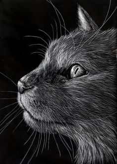 Black and white -  Scratchboard Art