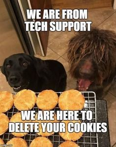 Enjoy the Best Collections of Funny Memes - Trending & Viral Meme Ever - Most Popular on Internet Now a Days. Memes about Life and more. Funny Dog Memes, Funny Animal Memes, Cute Funny Animals, Funny Animal Pictures, Funny Animal Videos, Funny Cute, Funny Dogs, Memes Humor, Funny Puppies