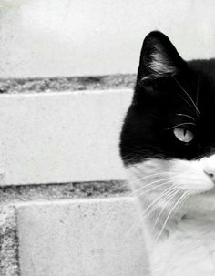 Who's That Masked Man (Kitty)?  Adorable! Crazy Cat Lady, Crazy Cats, Cool Cats, I Love Cats, Son Chat, Animal Gato, Black And White, White Cats, Domestic Cat