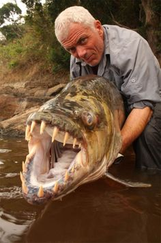 Jeremy Wade from River Monsters with a monstrous-looking fish—the Goliath Tigerfish. It grows like a goliath, hunts like a tiger and swims like a fish. It lurks in the freshwaters of the Congo River system and several other lakes in southern Africa