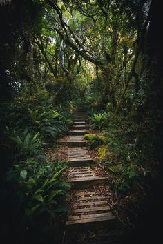 Download premium image of Pathway in a tropical jungle by Luke Stackpoole about forest dark green, steps forest, adventure, among, and botanical 595311