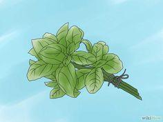 10 méthodes de préserver le Basilic