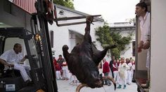 Pope Francis help us to stop cruelty to animals in the bullfighting countries