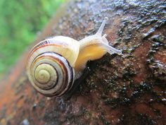 SNAILS COLOURFUL - Google Search