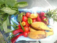 """""""Last Harvest"""" Akolele/NSW/Australia"""
