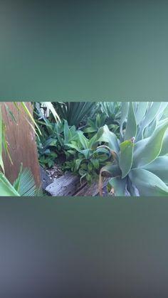 Compost Bucket, Worm Composting, Garden, Plants, Garten, Lawn And Garden, Gardens, Plant, Gardening