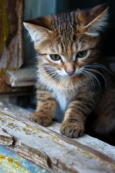 Sweet barn kitty