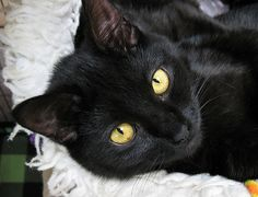 Spelling is Finnigan, and his sister is Tipper, but she is not in this picture. His mom is also a beautiful black cat, and her name is Lady McPhee, and she pictured today also.(8755finneganorfinniganckhspellinggorgeousboy)   GREAT PRICES on pre-owned 14k Jewelry. Code: 10PERCENT for 10% off at MedallionTradingCompany.com