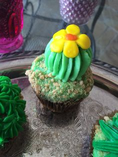 """Amazing Cactus Cupcakes my cousin who is not a pro baker made (not that you can tell!) For my 23rd """"Desert Dream"""" themed birthday.   Top is handmade buttercream icing-piped, handmade marshmallow fondant (which tastes WAY better than normal kind), gram crumble for sand, base is Pillsbury funfetti and chocolate box cake.   Total hit!"""