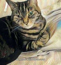 Caturday Art Cruelty Free Shop, Photo Editor Free, Animal Paintings, Art Blog, Cat Art, Free Photos, Animal Pictures, Pet Adoption, Kitty Paws