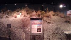 Spring mound #SpringsPreserve